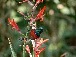 Hermoso Colibri Posando En Las Flores_150