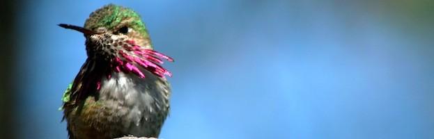 Humans and Hummingbirds