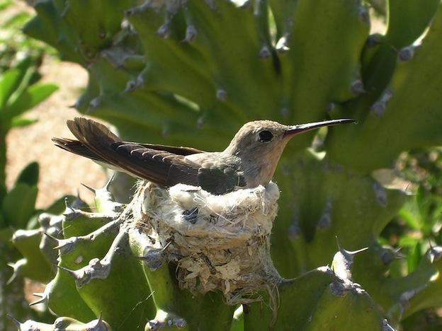 Huevos de colibríes.